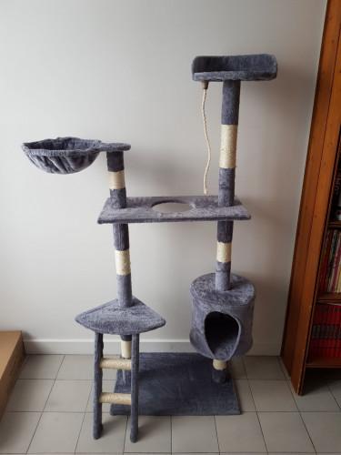 Dons de chaton