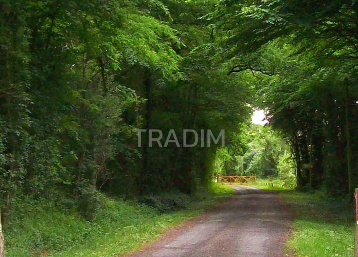 vente Montargis 5 hectares
