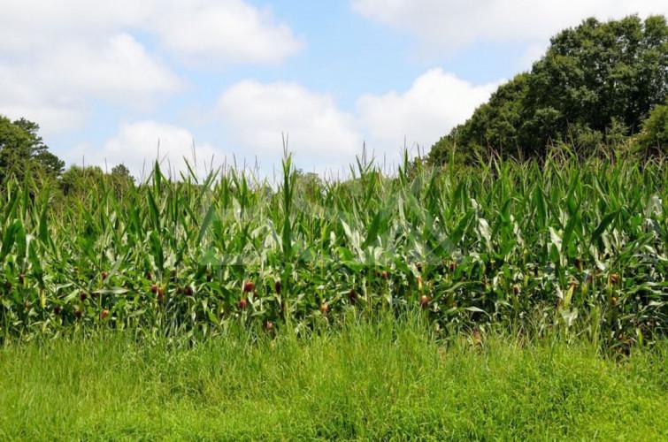 Terres Agricoles d'environ 25 ha  Secteur Landes proche de St sever